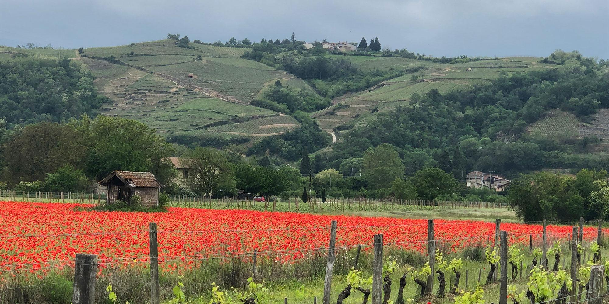 caves bérigny vignobles et champs