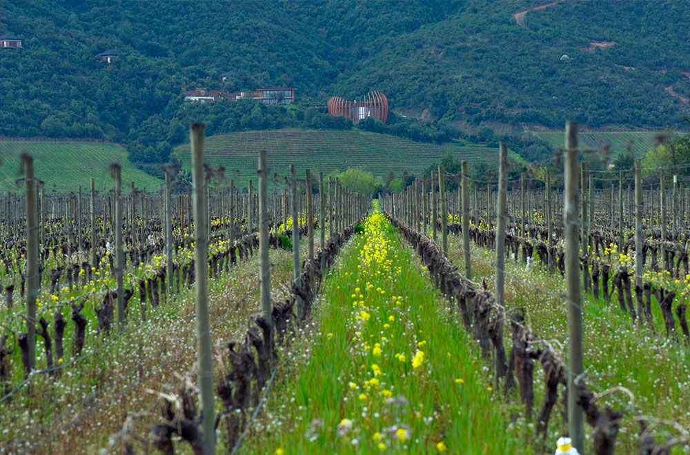 caves bérigny producteur vins